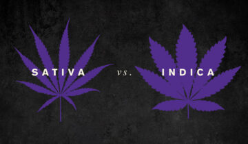 The Difference Between Sativas and Indicas (and Hybrids), Explained